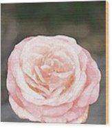 Rose 195 Wood Print by Pamela Cooper
