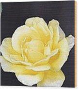 Rose 196 Wood Print