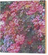 Rose 199 Wood Print by Pamela Cooper