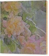 Rose 213 Wood Print