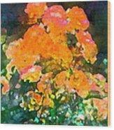 Rose 215 Wood Print