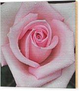 Rose 22 Wood Print