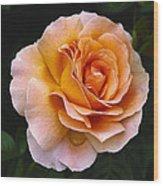 Rose 4 Wood Print