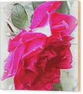 Rose - 4505-004 Wood Print