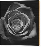 Rose 5 Wood Print