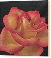 Rose 50 Wood Print