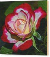 Rose 8 Wood Print
