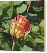 Rose Ablaze Wood Print