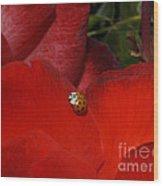 Rose And Ladybug Wood Print