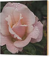 Rose And Rain - Pale Pink Raindrops Wood Print