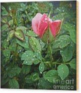 Rose And Rain Drops Wood Print