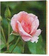 Rose And Raindrops Wood Print