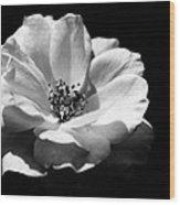 Rose Art Wood Print