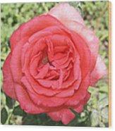 Rose At Clark Gardens Wood Print