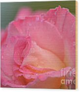 Rose Beauty Wood Print