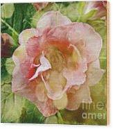 Rose Begonia In Pink Wood Print