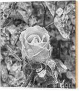 Rose Black Wood Print