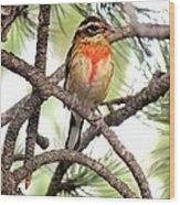 Rose-breasted Grosbeak Wood Print