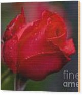 Rose Bud Wood Print