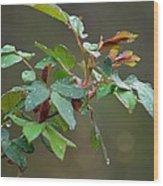Rose Bush Rain Wood Print