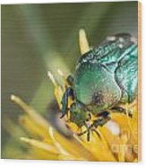 Rose Chafer Wood Print
