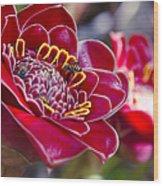 Rose De Porcelaine Wood Print