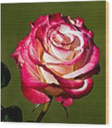 Rose Dick Clark Wood Print