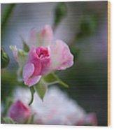 Rose Emergent Wood Print