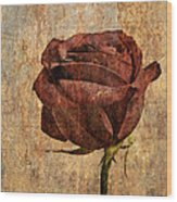 Rose En Variation - S22ct05 Wood Print