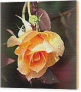Rose - Flower - Card Wood Print