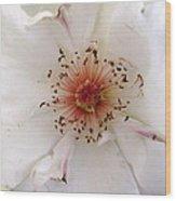 Rose Flower Wood Print by Joyce Woodhouse