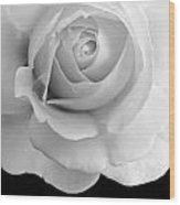 Rose Flower Macro Black And White Wood Print