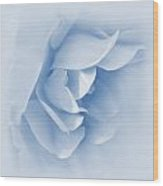 Rose Flower Petals Soft Blue Wood Print