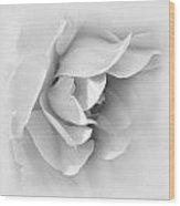 Rose Flower Soft Gray Wood Print