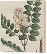 Rose Flowering Locust Wood Print