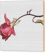 Rose For Isabel Wood Print