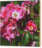 Rose Garden 4 Wood Print