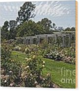 Rose Garden At The Huntington Library Wood Print