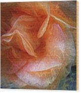Rose Glows Wood Print