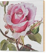 Watercolor Of Pink Rose Grace Wood Print
