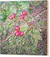Rose Hip Imp Wood Print