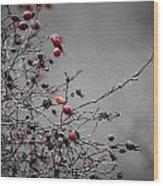 Rose Hip Red Wood Print