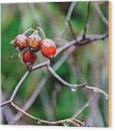 Rose Hip Wet Wood Print