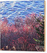 Rose Hips By The Seashore Wood Print