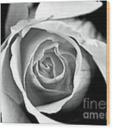 Rose In Black And White Wood Print