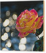 Rose In Dappled Afternoon Light Wood Print