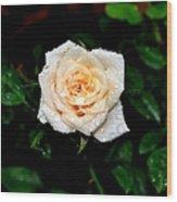 Rose In The Rain Wood Print