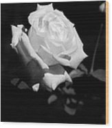 Rose - Infrared Wood Print