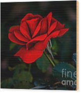 Rose Is A Rose Wood Print by Robert Bales