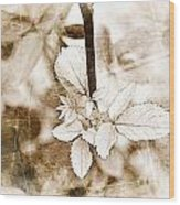 Rose Leaf Photoart Wood Print